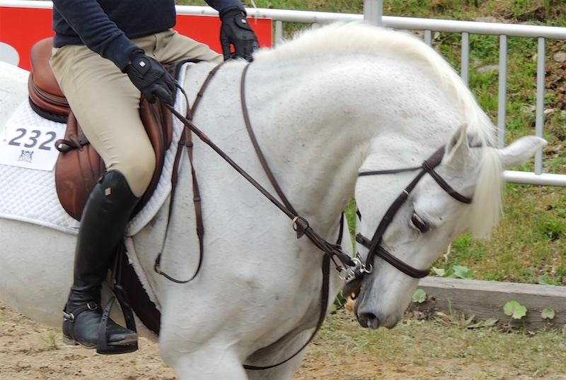 Equestre 80012