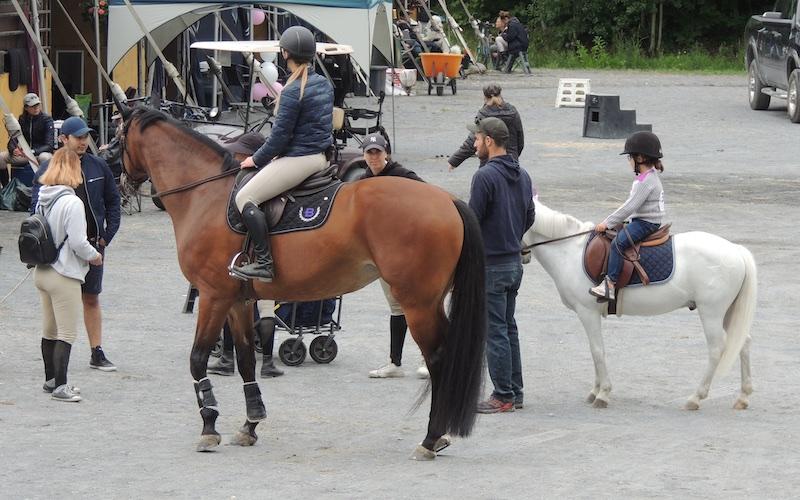 Equestre 80020
